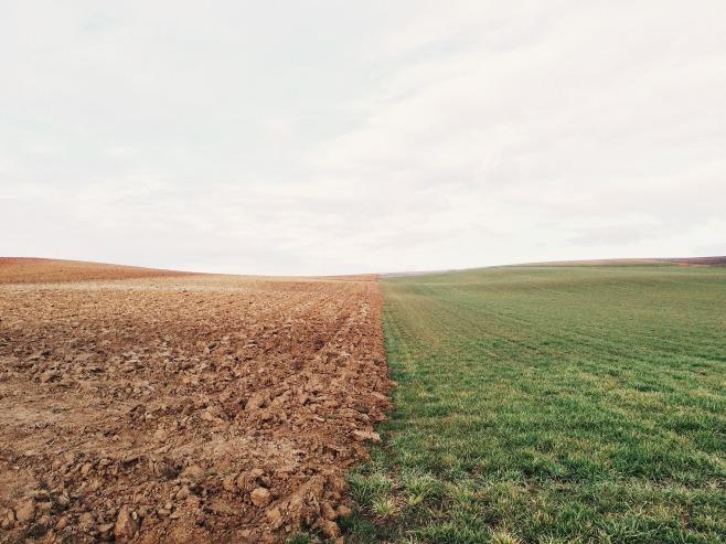 farmland-801817_1920 (2)